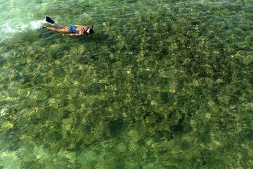 Excursão com mergulho com em Kealakekua com o opcional da Honaunau Bay