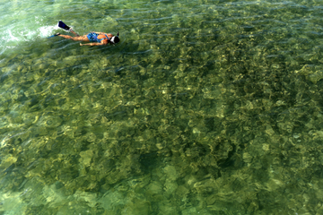 Sortie de plongée libre dans Kealakekua Bay avec en option Honaunau...