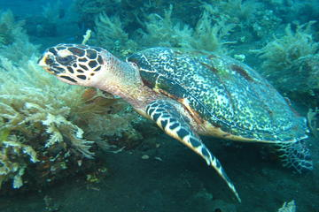 PADI Open Water Diver, Option 3, 1 day in Padang Bay and 1 day in Tulamben