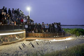 メルボルン発ペンギン プラス席付きフィリップ島…
