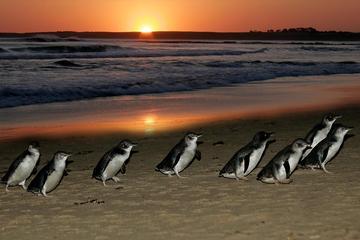 Viagem diurna para Phillip Island...
