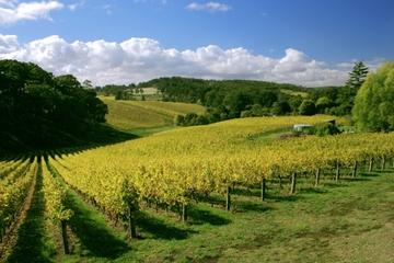 Tour McLaren Vale et Glenelg avec dégustations de vins au départ...