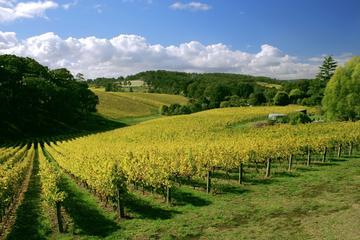 Tour por McLaren Vale y Glenelg con catas de vino desde Adelaida