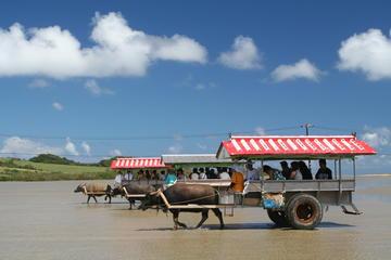 水牛車の乗車付き西表島、由布島、竹富島ツアー