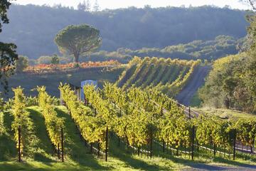 Visite de vignobles dans la vallée de Napa au départ de San Francisco