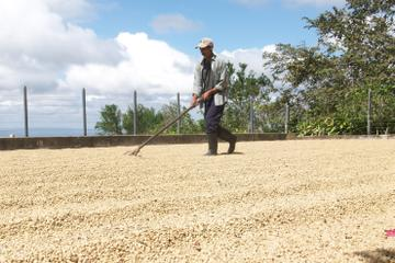 Café Las Flores Coffee Plantation Tour