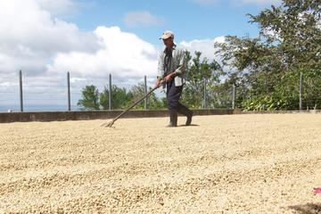 Recorrido por la plantación de Café...
