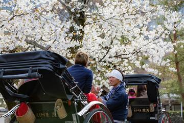 KYOTO Arashiyama - 180min SAKURA Tour