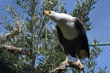 Malta Falconry Centre Admission Ticket