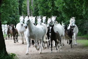 Private Tour: Lipica Stud Farm (Lipizzaner Stud Farm)