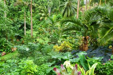 Barbados Half-Day Garden Tour