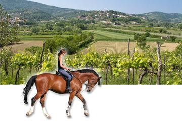 Heste og vinmarker