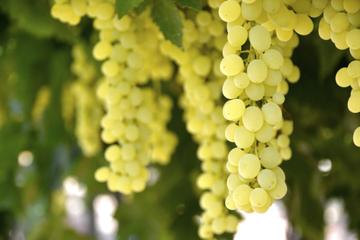 Tour privé des vignobles de l'Irpinia avec un sommelier