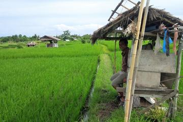 Bali Small-Group Hiking Tour: Hidden Rice Terraces