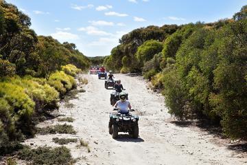 Tour in quad dell'Isola dei Canguri