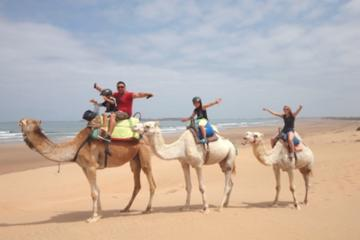 Agadir Camel Ride - 2 Hours