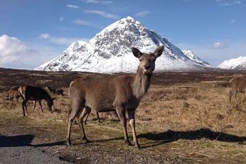 Tour di Glencoe, di Loch Ness e delle