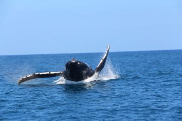 Half-Day Narrated Whale Watch Tour from Eleele