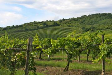Passeio de um dia à região vinícola de Tokaj saindo de Budapeste