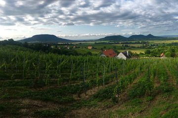 Private Somló and Northern Balaton Wine Day Trip from Budapest