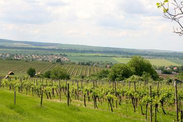 Private Wine and Sightseeing Tour with One-Way Budapest - Bratislava Transfer