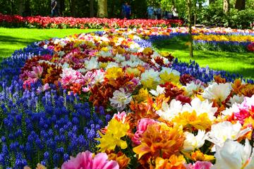 Amsterdam Combo: Keukenhof Gardens and Zaanse Schans