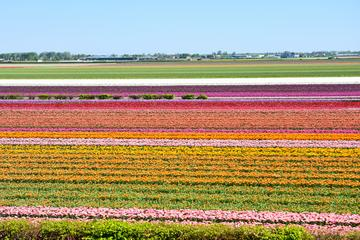 Small Group Day Trip to Keukenhof and Flowerfields - Volendam and ...