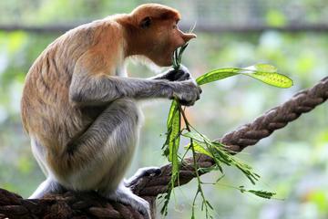 Visita privada: Kuching visita turística por la familia y pasar la...