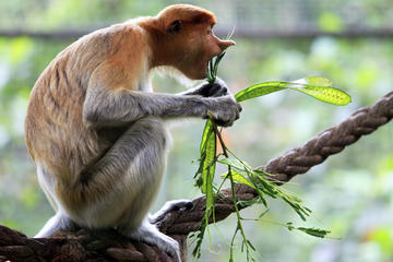 Visita privada: Kuching visita...