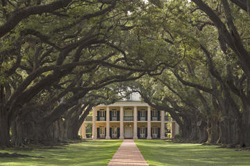 Oak Alley and Laura Plantation Tour with Transportation from New...
