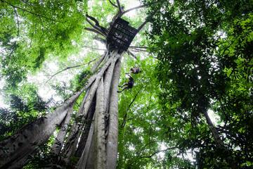 チェンマイの熱帯雨林を行くキャノピー ジップラ…