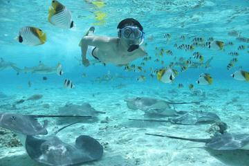 Bora Bora Snorkel Cruise with Shark ...