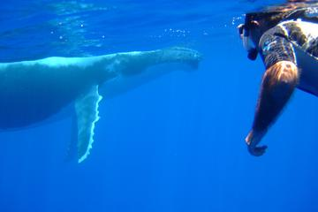 Private Bora Bora Whale Watching and...