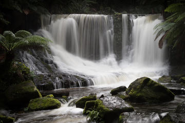Mt Field National Park incl Russell Falls - private sightseeing and...