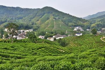 Privétour: ultieme sightseeingtour van Hangzhou