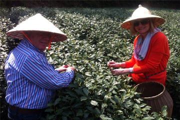 Private ganztägige Teekultur-Tour in Hangzhou ab Shanghai