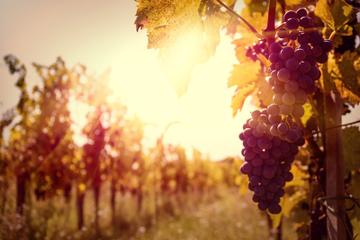 Private Führung: Ribatejo-Region mit Weinprobe