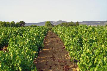Atelier du vin en Provence au départ...