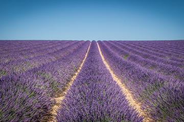 Half-Day private Lavender Tour in Valensole from Marseille