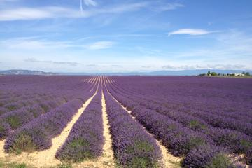 Half-Day Lavender Tour from Aix-en-Provence
