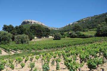 Private Cassis and Bandol wine tour