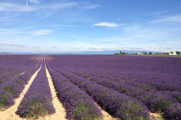 Small-Group Lavender tour of Valensole, Moustiers Sainte Marie and...