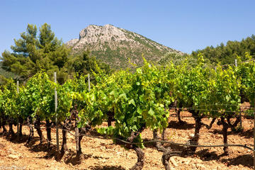 Wine tour in Coteaux d'Aix en Provence from Marseille