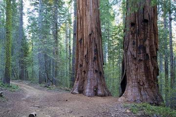 Giant Sequoia Grove Hike