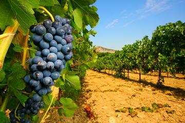 Dégustation de vins à Châteauneuf-du-Pape au départ d'Avignon...