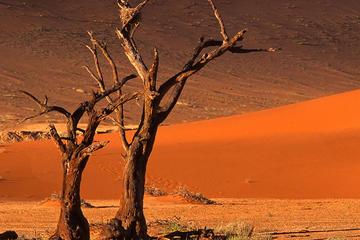 3 jours de safaris Sossusvlei (avec...