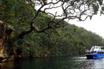 Excursión de un día al Parque Nacional Ku-ring-gai Chase desde Sídney