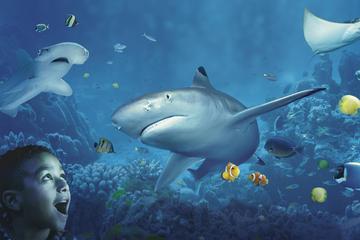 Book SEA LIFE Charlotte Concord Aquarium Admission on Viator