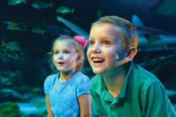 Day Trip SEA LIFE Kansas City Aquarium near Kansas City, Missouri