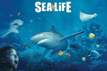 SEA LIFE Minnesota Aquarium at the Mall of America